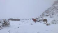 कुदरत का करिश्मा ! जब रेगिस्तान मेंं पड़ने लगी बर्फ, हैरान होकर आसमान की तरफ देखने लगे ऊंट