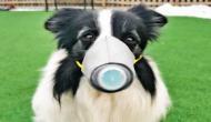 कोरोना वायरस ढूंढने के लिए अमेरिका-ब्रिटेन की नई तरकीब, कुत्तों को दी जा रही स्पेशल ट्रेनिंग