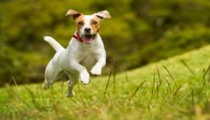 कुत्ता पालने वालों के लिए बड़ी खबर, अब डॉगी के गले में पहनाना होगा आईकार्ड वरना देना होगा जुर्माना