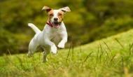 पुलिस ने कुत्ते का कराया DNA टेस्ट, जानिए क्यों लिया गया ये अनोखा फैसला