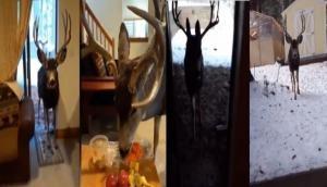 इस महिला ने घर बुलाकर हिरन के साथ किया ऐसा काम कि पड़ गए लेने के देने, देखें वीडियो