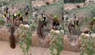 Video: पानी से भरी खाई में गिर गया हिरन, निकालने पहुंचे साइकिल चालक तो हुआ कुछ ऐसा...