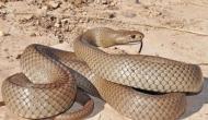 Snake Temple : एक ऐसा मंदिर जहां आते ही उतर जाता है अत्यंत विषैले सांपों का जहर, पूरी हो जाती हैं सभी मन्नतें