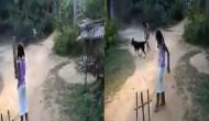 क्रिकेट खेल रहे बच्चे के लिए डॉगी बन गया विकेटकीपर, वीडियो में देखें शानदार नजारा