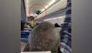 Video: फ्लाइट में उड़ान के दौरान घुसे कबूतर, यात्रियों ने देखा तो उड़ गए होश