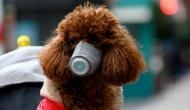 Coronavirus: Pet dog infected with COVID-19; Hong Kong authorities confirm first case of animal