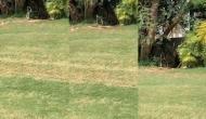 गोल्फ कोर्स में डांस करते कैमरे में कैद हुए दो कोबरा, वीडियो में देखें अद्भुुत नजारा