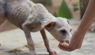 Kolkata: Locals abused women for feeding stray dogs amid lockdown