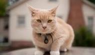 केरल में कोरोना वायरस वार्ड में मिली 5 बिल्लियों की हुई मौत, कारण जानने में जुटे वैज्ञानिक