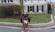 लॉकडाउन के दौरान लोगों को ऐसे वाइन पहुंचा रहा ये कुत्ता, देखें शानदार वीडियो