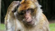 कोरोना वायरस का असर, छत पर पतंग उड़ाता हुआ दिखाई दिया बंदर, देखें हैरान करने वाला वायरल वीडियो