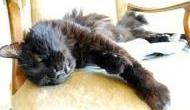 बिल्ली नहीं बल्कि इन जानवरों का रास्ता काटना है होता अपशगुन,  मिलता है संकटों का संकेत!