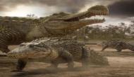 कभी पृथ्वी पर पाए जाते थे विशालकाय मगरमच्छ, जो डायनासोर का करते थे शिकार