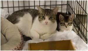 Coronavirus: 2 pet cats test positive in New York