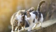इंसानों से अब जानवरों में फैलने लगा कोविड-19, न्यूयॉर्क में दो पालतू बिल्लियों को हुआ कोरोना
