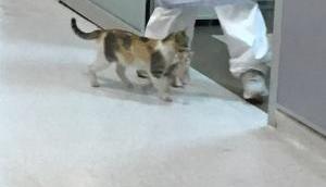 मां जैसा कोई नहीं, बिल्ली का बच्चा हुआ बीमार तो मुंह में दबाकर पहुंच गई अस्पताल, फिर हुआ ये..