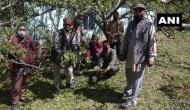Himachal Pradesh: Hailstorm destroys apple crop in Nankhari area