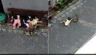 खौफनाक Video: गली में बैठी थी छोटी बच्ची, बंदर आया और जमीन पर घसीटते हुए ले गया..
