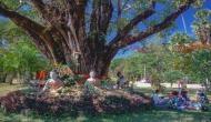 बुद्ध पूर्णिमा 2020: बोधिवृक्ष को नष्ट करने की हो चुकी है कोशिश, जहां भगवान बौद्ध को प्राप्त हुए था ज्ञान