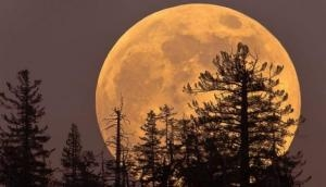 Cold Moon: Last and highest full moon of 2020, all you need to know