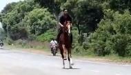 Coronavirus: विधायक के बेटे ने उड़ाई लॉकडाउन की धज्जियां, बिना मास्क लगाए सड़क पर दौड़ाया घोड़ा