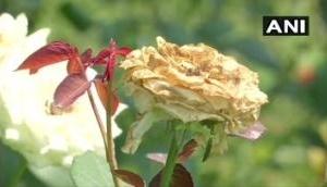 उत्तराखंड : लॉकडाउन ने 250 करोड़ के फूलों का कारोबार किया चौपट