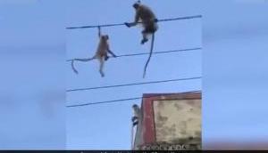 Video: अपने बच्चे को बचाने के लिए तार पर कूदी बंदरिया, इसके बाद जो हुआ देख हो जाएंगे इमोशनल