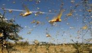 Delhi govt issues advisory to gear up for probable locust attack
