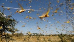 Locust attack: Jharkhand's border districts on high alert
