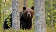 पहा़ड़ी पर था 12 साल का लड़का, तभी अचानक से आ गया भालू, Video में देखें आगे क्या हुआ