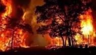 कैच फैक्ट चेक: उत्तराखंड के जंगलों में आग लगने का दावा करने वाली खबर का सच जानिए