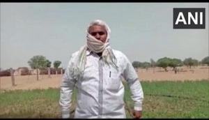 Locust attack in Rajasthan village, farmer says crops destroyed
