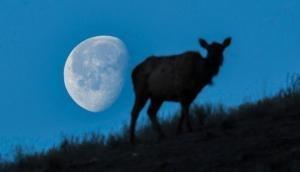 Lunar Eclipse 2020: भारत में दिखाई नहीं दे रहा चंद्र ग्रहण, इन देशों में आ रहा नजर