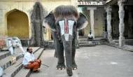 इस हाथी का हेयरस्टाइल देखकर जलन हो जाएगी आपको, सोशल मीडिया पर मचाया तहलका