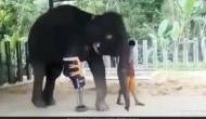 Video: हाथी का कट गया था एक पैर, इसके बाद भी जज्बा नहीं हुआ कम, देखकर आप भी करेंगे सैल्यूट