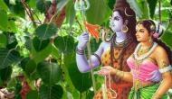 Hariyali Teej 2020: हरियाली तीज के मौके पर मां पार्वती को ऐसे करें प्रसन्न, हर कामना होगी पूरी