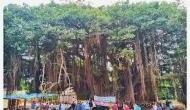400 साल पुराने पेड़ को बचाने के लिए नितिन गडकरी ने बदला हाईवे का रूट, हुई जमकर तारीफ
