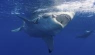 OMG! Man jumps onto great white shark to save his wife; see video