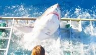 पत्नी को बचाने के लिए शार्क से भिड़ गया पति, पूरे देश में हो रही शख्स की बहादुरी की तारीफ