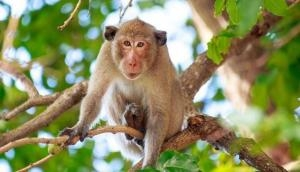 What! Monkey robs Rs 1 lakh from autorickshaw; bizarre incident goes viral