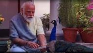 Video: PM मोदी को देखते ही उनके पास आ गया मोर, देखिए खास दोस्ती की ये शानदार तस्वीर