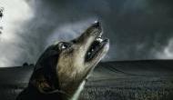 आधी रात में घर के बाहर क्यों रोते हैं कुत्ते? वजह जानकर दहशत में आ जाएंगे आप