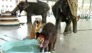नामकरण के बाद पूल में कूद गया हाथी का बच्चा, वीडियो में देखें कैसे की मस्ती