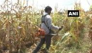 अमेरिका में कर रहा था लाखों डॉलर की नौकरी, छोड़कर भारत वापस लौटे इंजीनियर ने शुरू की भुट्टे की खेती