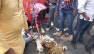 Kangana Office Demolition: Karni Sena supports Panga actress, holds protest against Sanjay Raut in Delhi