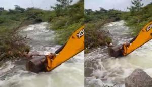 कुत्ते की जान बचाने के लिए जवान ने लगा दी जेसीबी से नदी में छलांग, वीडियो में देखें फिर हुआ क्या?