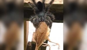 Video of spider eating a bird will give you goosebumps! Netizens ask 'is this even real?'
