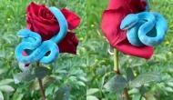 गुलाब के फूल पर बैठा नजर आया नीले रंग का दुर्लभ सांप, सोशल मीडिया में वायरल हुआ वीडियो