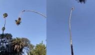 Viral Video: क्या ये है दुनिया का सबसे मूर्ख व्यक्ति? पेड़ की जिस डाली पर बैठा था उसी को काट दिया और फिर...