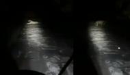 रात के अंधेरे में घर जा रहा था फॉरेस्ट गार्ड, तभी सामने से आ गया शेर और फिर...